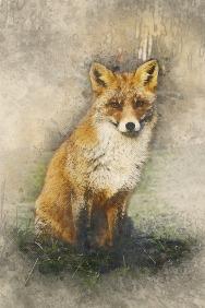fox-3028847_1920